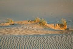 Hierba en la duna. Fotos de archivo
