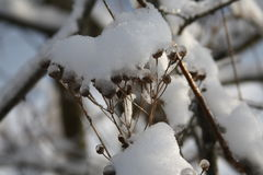 Hierba en la nieve Fotografía de archivo libre de regalías