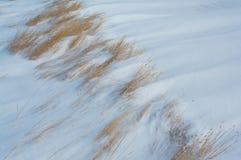 Hierba en la nieve soplada viento Fotos de archivo
