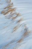 Hierba en la nieve soplada viento Imágenes de archivo libres de regalías