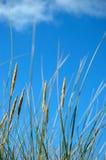 Hierba en la playa imagen de archivo