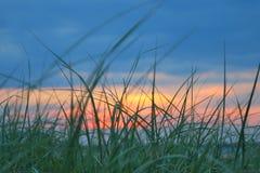 Hierba en la playa delante de la puesta del sol Fotografía de archivo