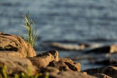 Hierba en la playa, mar en fondo Fotografía de archivo