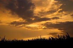 Hierba en la puesta del sol Imágenes de archivo libres de regalías