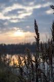 Hierba en la puesta del sol Imagen de archivo libre de regalías