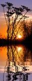 Hierba en la puesta del sol por encima de la superficie con la reflexión Foto de archivo libre de regalías