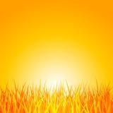 Hierba en la puesta del sol. Vector Fotos de archivo libres de regalías
