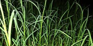 hierba en la tierra en la estación de lluvias fotos de archivo