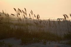 Hierba en las dunas   Imagen de archivo libre de regalías