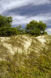 Hierba en las dunas de arena Fotografía de archivo