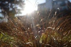Hierba en luz del sol Imagen de archivo