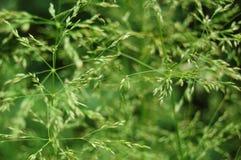 Hierba en macro Primer verde del backgroundÑŽ de la hierba Fotografía de archivo libre de regalías
