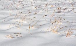 Hierba en nieve Imagen de archivo libre de regalías