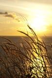Hierba en puesta del sol Foto de archivo libre de regalías