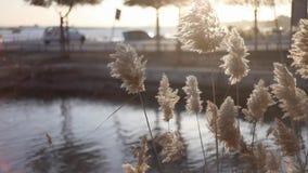 Hierba en sol metrajes