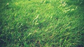 Hierba en sol y viento