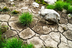 Hierba en tierra seca Fotos de archivo