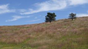 Hierba en un campo que sopla en el viento