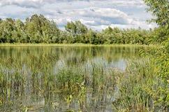 Hierba en un pequeño lago Imagen de archivo libre de regalías