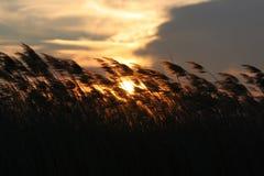 Hierba en viento Fotos de archivo libres de regalías