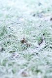 Hierba escarchada de la mañana Foto de archivo libre de regalías