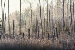 Hierba escarchada en el pantano Fotos de archivo libres de regalías