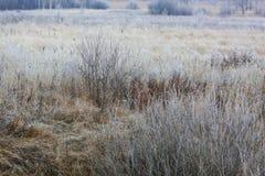 Hierba escarchada en el prado Imágenes de archivo libres de regalías