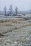 Hierba escarchada en el prado Fotografía de archivo