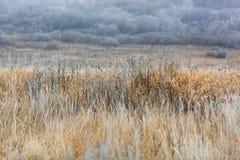 Hierba escarchada en el prado Foto de archivo