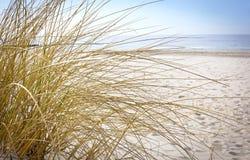 Hierba europea de la duna Fotos de archivo libres de regalías