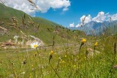 Hierba floreciente en las montañas Fotos de archivo libres de regalías