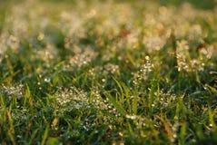 Hierba fresca con gotas del agua Fotografía de archivo