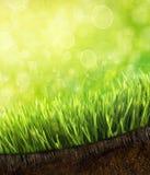 Hierba fresca de la primavera con rocío contra un cielo azul Imagen de archivo