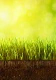 Hierba fresca de la primavera con rocío contra un cielo azul Fotos de archivo