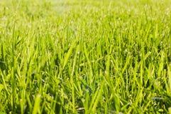 Hierba fresca del corte Foto de archivo libre de regalías