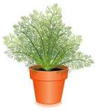 Hierba fresca del eneldo en un crisol de flor Imagen de archivo libre de regalías