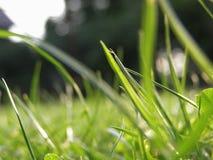 Hierba fresca del resorte Foto de archivo libre de regalías