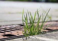 Hierba fresca joven verde que crece en la ciudad del asfalto Fotos de archivo