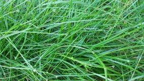 Hierba fresca verde Imagen de archivo