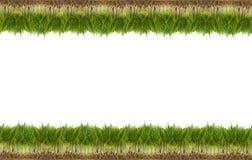 Hierba fresca verde ilustración del vector