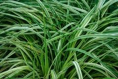 Hierba fresca verde fotos de archivo
