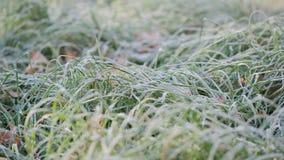 Hierba helada con las hojas del roble almacen de metraje de vídeo