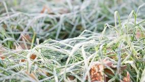 Hierba helada con las hojas del roble metrajes