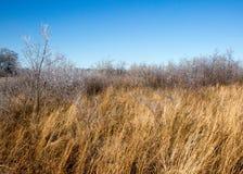 Hierba helada en campo Fotografía de archivo