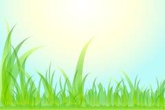 Hierba hermosa del fondo floral. stock de ilustración