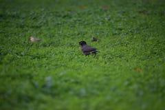 Hierba hermosa del pájaro del verde del jardín del parque imagen de archivo libre de regalías