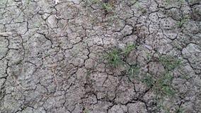 Hierba, hierba, arcilla, arcilla, arcilla gris Foto de archivo libre de regalías