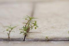 Hierba, hojas verdes en el suelo de baldosas agrietado foto de archivo libre de regalías
