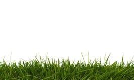 Hierba horizontal. Foto de archivo libre de regalías