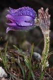 Hierba ideal de la flor fotografía de archivo libre de regalías